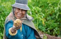 Professionalize impact investing impact- Latin page