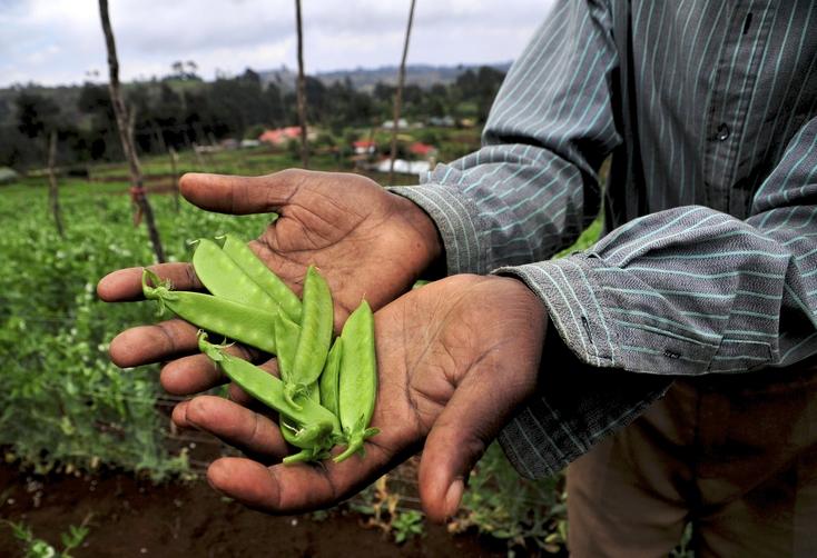 Engager la transformation du secteur agricole et assurer la sécurité alimentaire